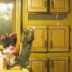 un chat malin tente d'attraper des ballons