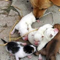 une chienne donne naissance à un chaton