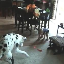 Un chien et un bébé jouent au même jeu