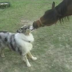 un chien et un cheval s'embrassent