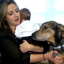 un chien sauve un bébé