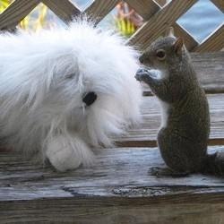 une chienne recueille des ecureuils