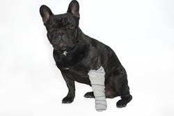 urgence soins chien