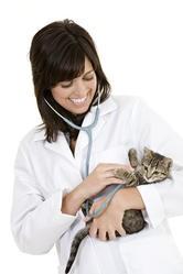 vétérinaire soigner son chien