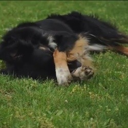 """Comment apprendre le tour """"cache-toi"""" à son chien ? La réponse en vidéo"""