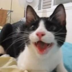 chat fait comme chien