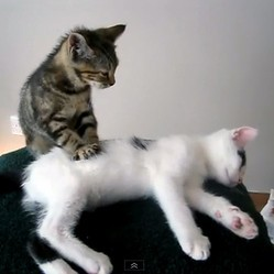 video de chat massage chaton