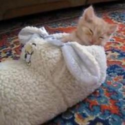 chat dors pantoufle