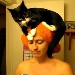 Avoir un beau chat-peau (Vidéo du jour)