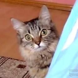 video de chat lolcat machiavelique