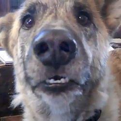 video du chien qui parle succes 2011