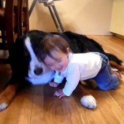 video chien bébé rigole