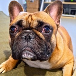 dramatic dog un chien mourir de rire vid o du jour vid os wamiz. Black Bedroom Furniture Sets. Home Design Ideas