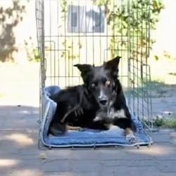 chien cage