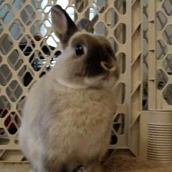 video lapin energizer