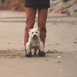 apprendre la marche enfantine à son chien