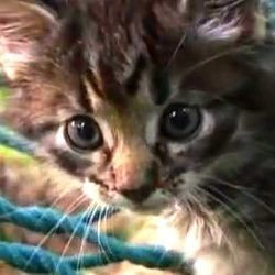 chatons mignons video youtube