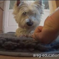 Apprendre l'ordre pas toucher à son chien