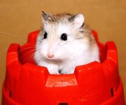 vidéos hamster rongeurs