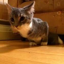video de chat drole