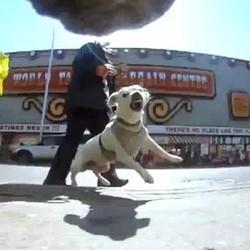 voir vie de chien video