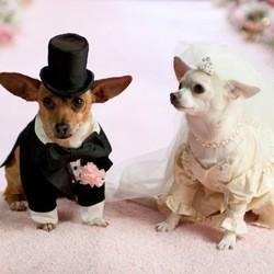 Visuel Chihuahua concours février