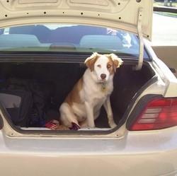 voiture pour chien cage de transport pour chien