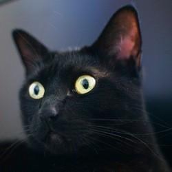 vol de chat protection animaux lettre sarkozy