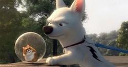 chien star Volt