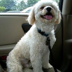 voyager avec chien transport