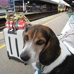 voyager avec son chien : quel transport ?