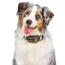 collier traqueur d'activité pour chien