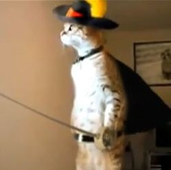 standing cat chat potté