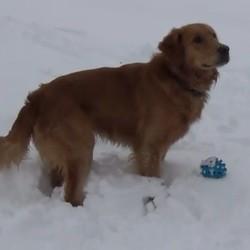chien joue dans la neige