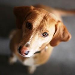 boutique croquetteland croquettes pour chien