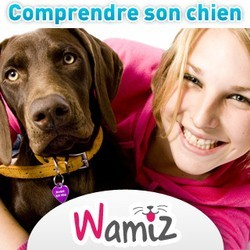 applications ipad2 wamiz chien chat