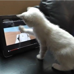 un chaton regarde le trailer de star wars