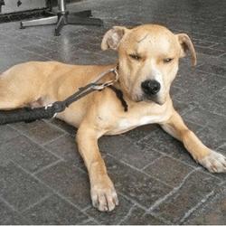 chien malraité