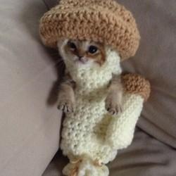 Chaton déguisé en champignon