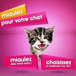 whiskas chaton miaulez pour votre chat