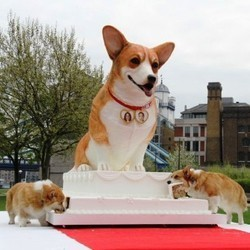 prince william kate mariage gateau chien