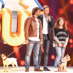 chien concours canin