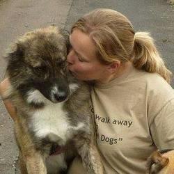 un chien sauvé des combats de chiens en Afghanistan