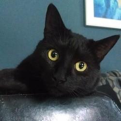 chat de laboratoire