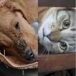 une chienne et un chat animaux de l'année