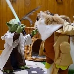 Yoda et les animaux