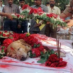 hommage à un chien renifleur ayany sauvé des centaines de vies