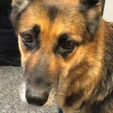Naufrage dans les eaux du Queensland : un chien nage pendant 11 heures pour sauver son maître