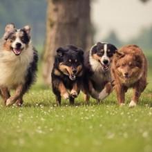 Brest. Quatre chiens mystérieusement empoisonnés dans la même demeure