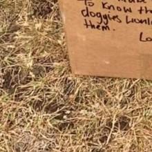 Elle promène un chien et trouve une boite mystérieuse : son contenu est bouleversant